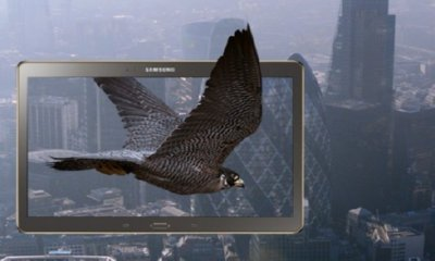 Win a Samsung Galaxy Tab S & an Exclusive Falconry Experience